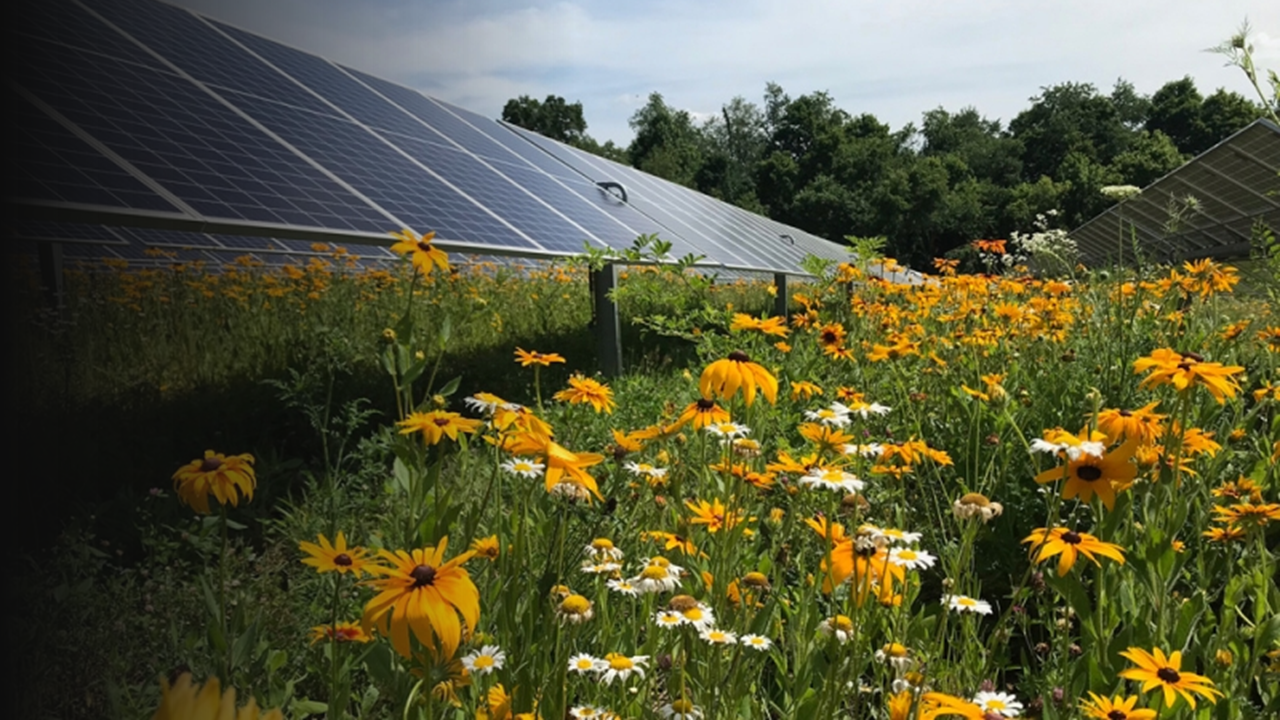Pollinator-Friendly Solar Generation