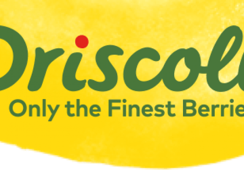 Driscolls picks solar power